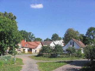 Fotografie Zlátenky